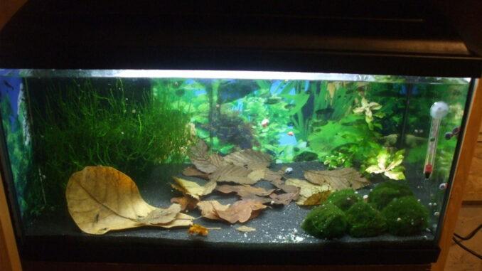 54 Liter Aquarium mit Laub